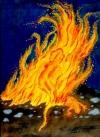 11 Feuer-Salamander 30ml Pipettenflasche